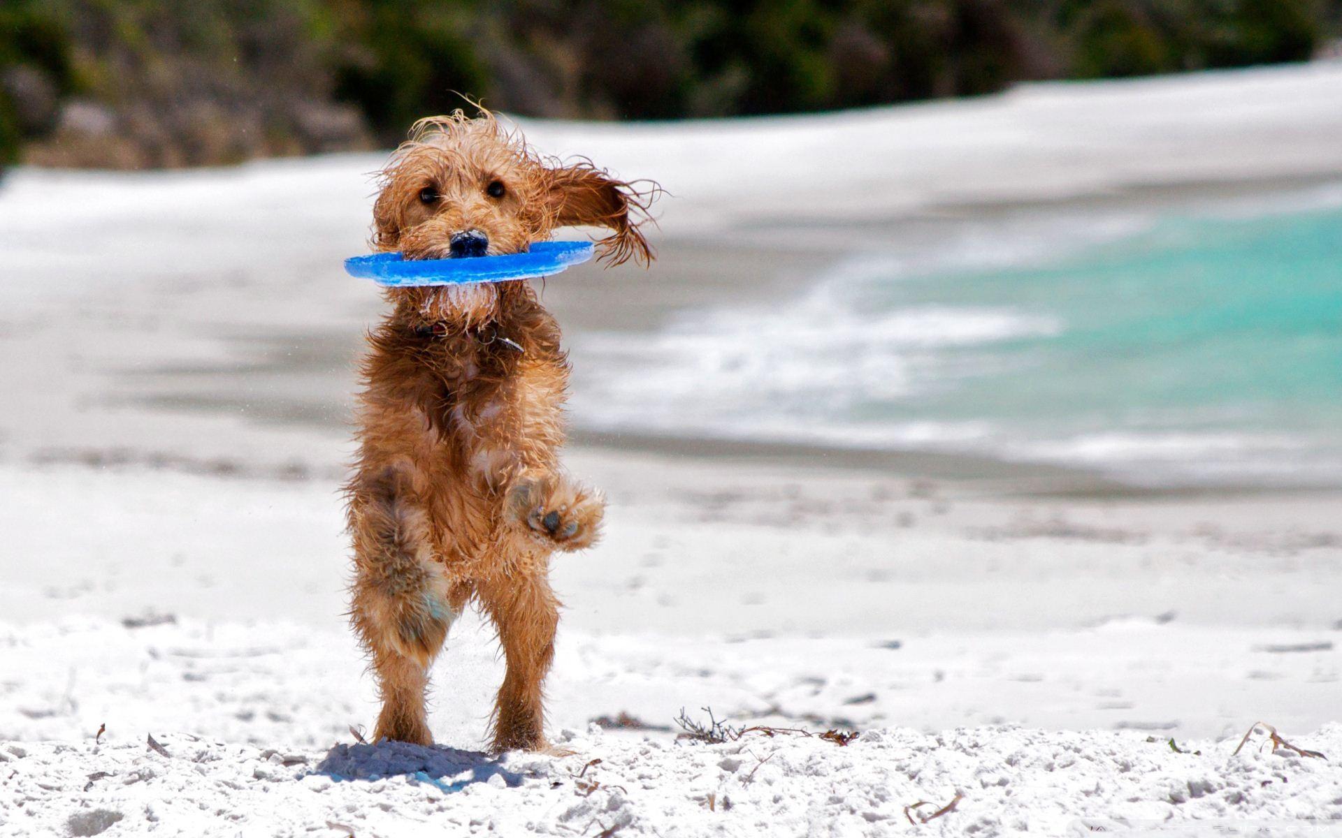 dog-beach-2017-1