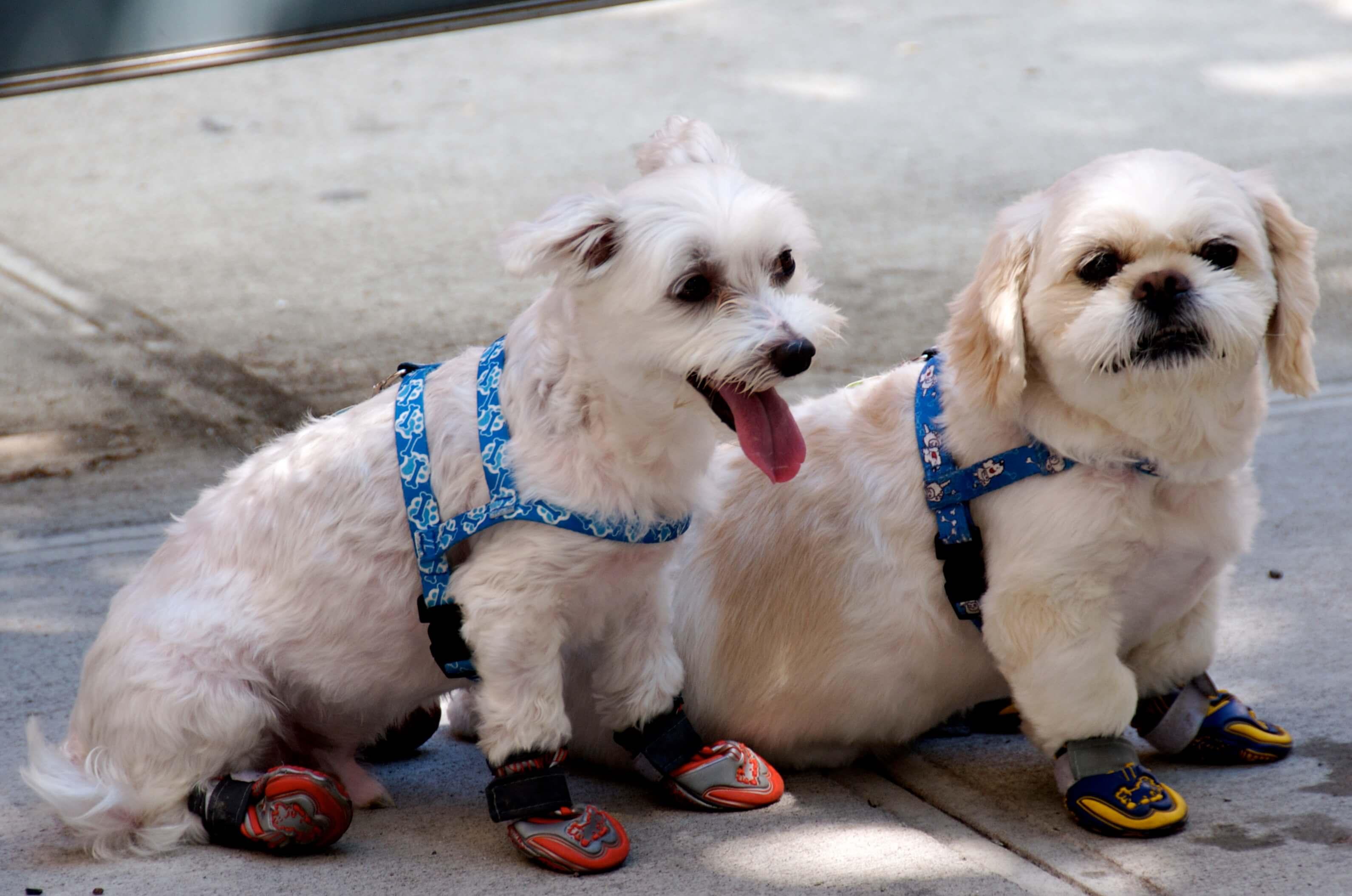 proteger-pattes-chien-5
