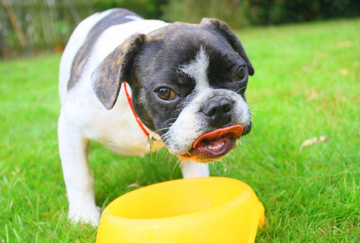 signes-deshydratation-chien-22