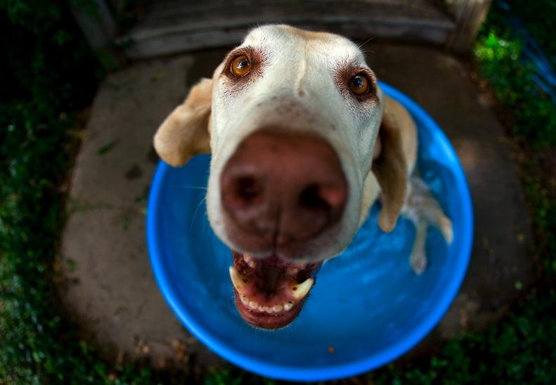 signes-deshydratation-chien-3