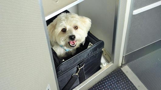 voyager-avion-chien-2