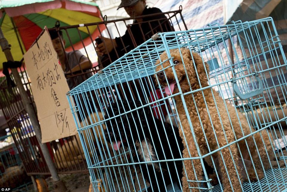 yulin-festival-chien-14