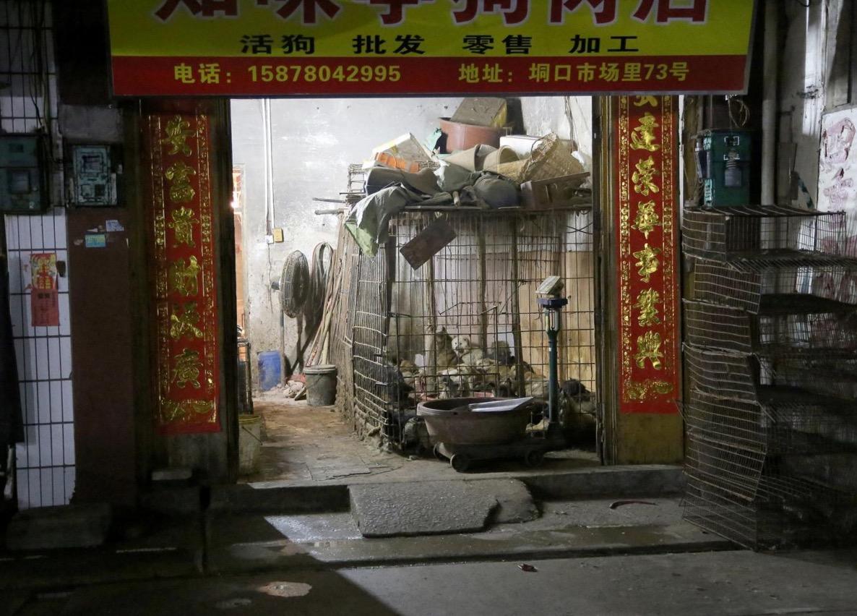 yulin-festival-chien-3