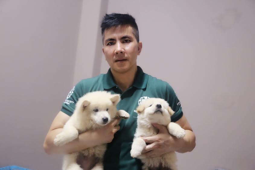 yulin-festival-dog-meat-32
