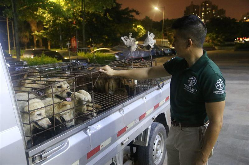 yulin-festival-dog-meat-33