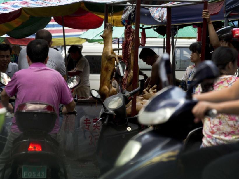 yulin-festival-dog-meat-8