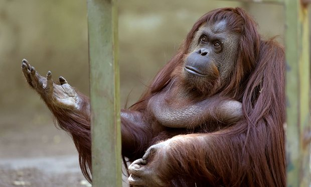 zoo-buenos-aires-fermeture-8