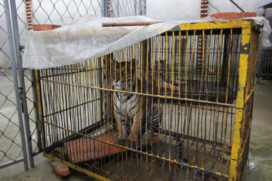 PETA-cirques-chine-enquete-3