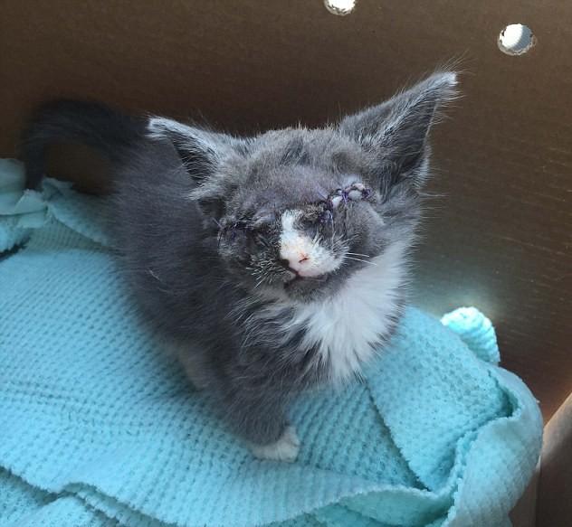 blind-kitten-braille-4