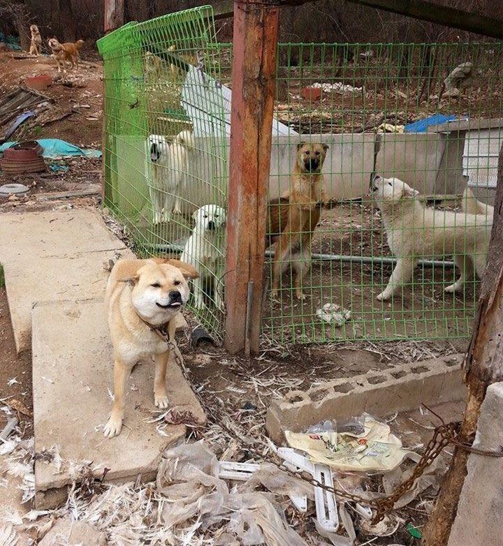 bok-nal-festival-viande-chien-coree-sud-1
