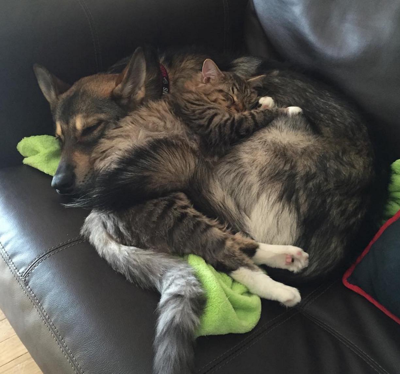 chien-adopte-chat-refuge-raven-2
