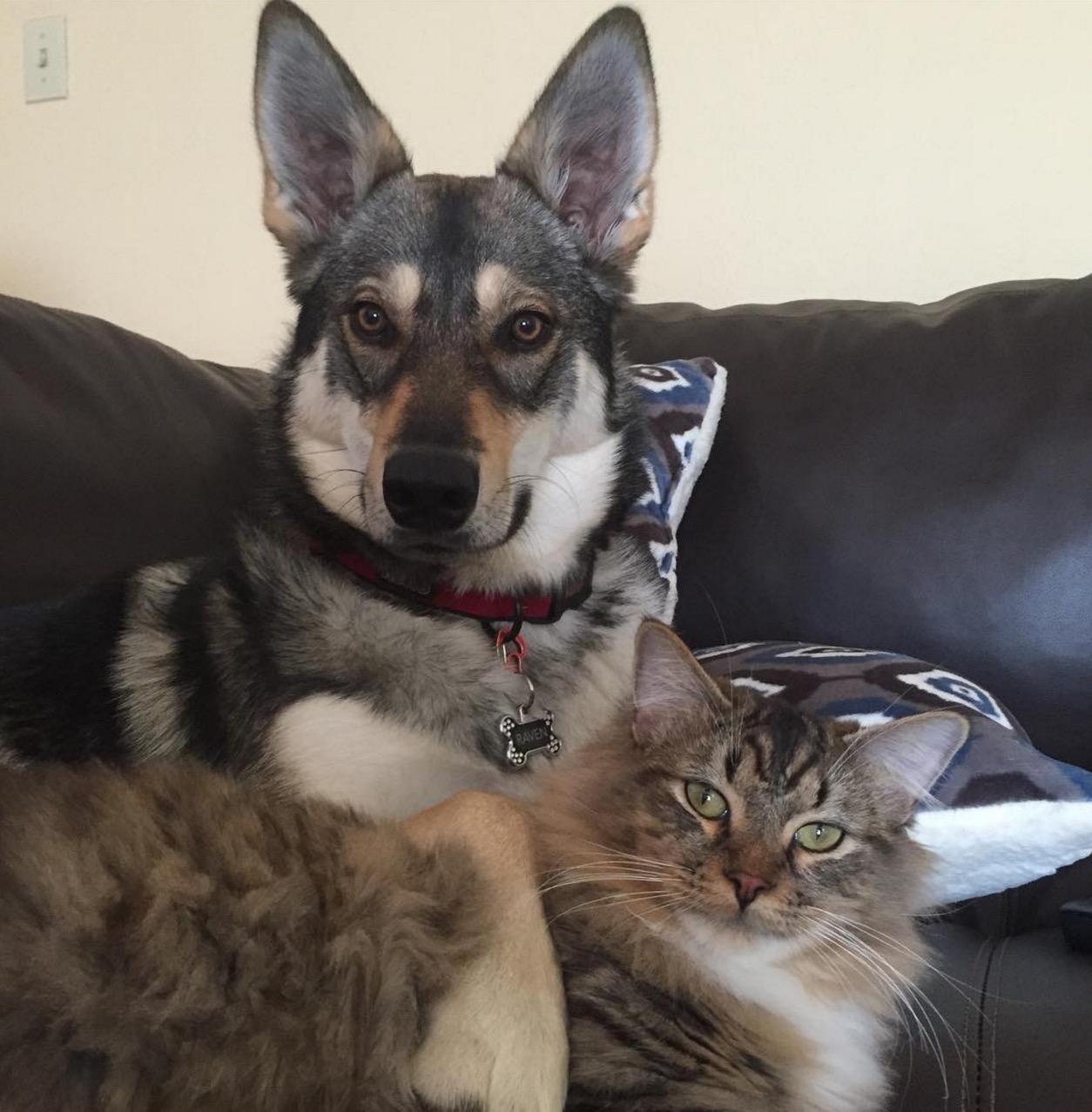 chien-adopte-chat-refuge-raven-5