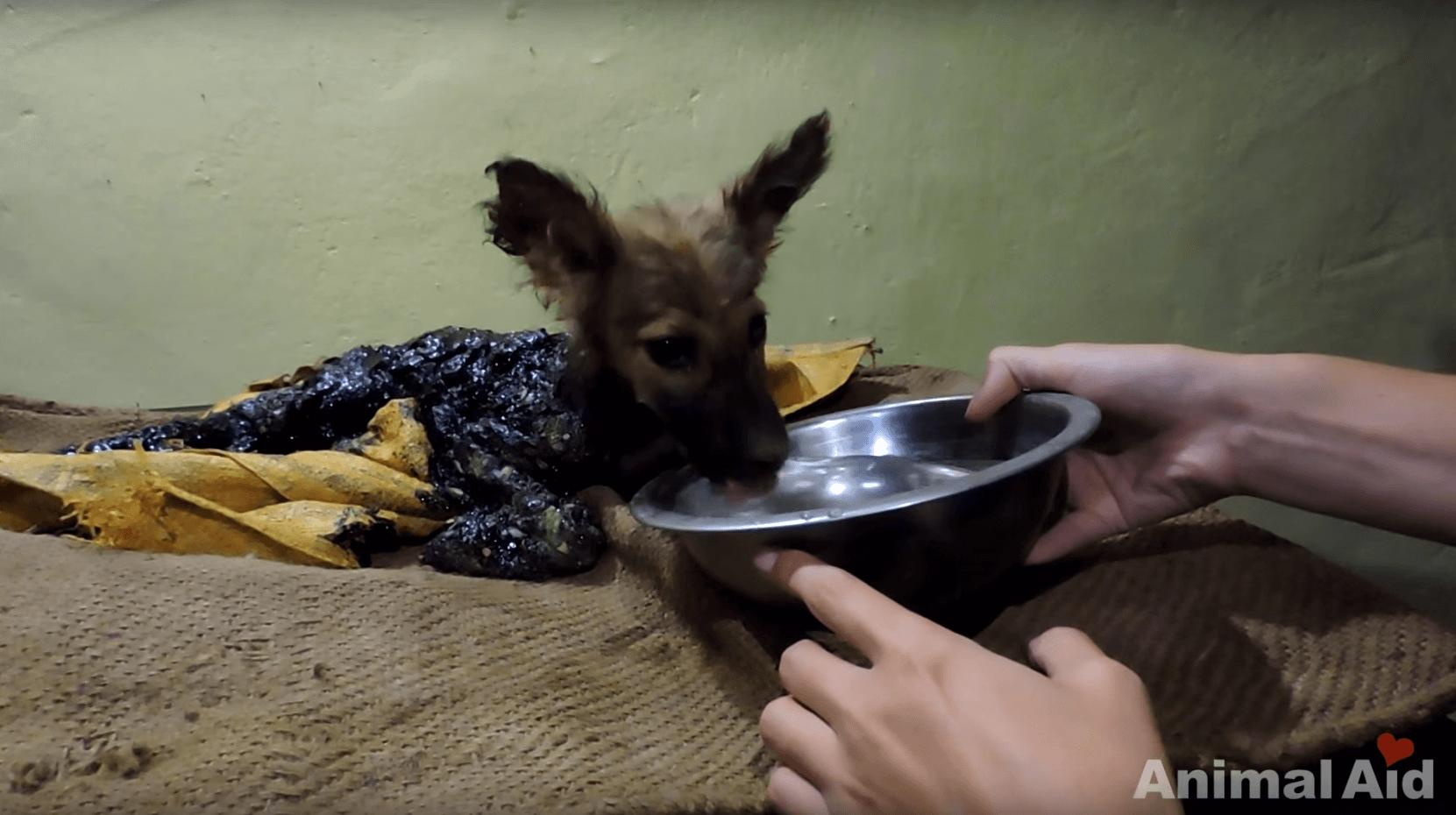 chien-goudron-inde-2