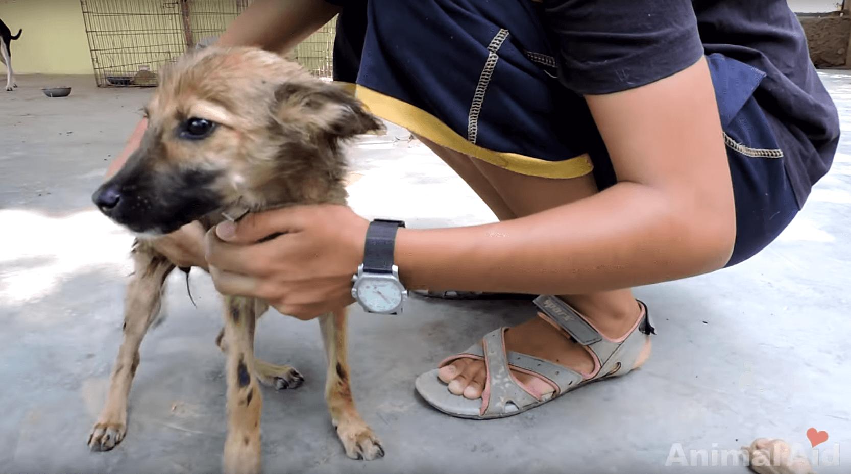 chien-goudron-inde-6