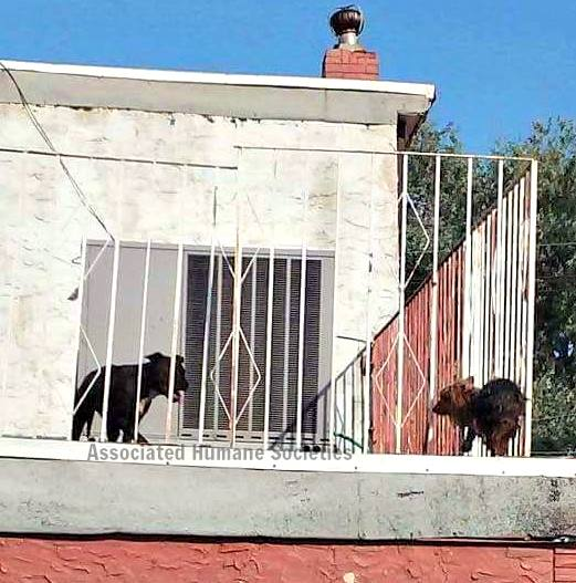 dogs-roof-dancing-1