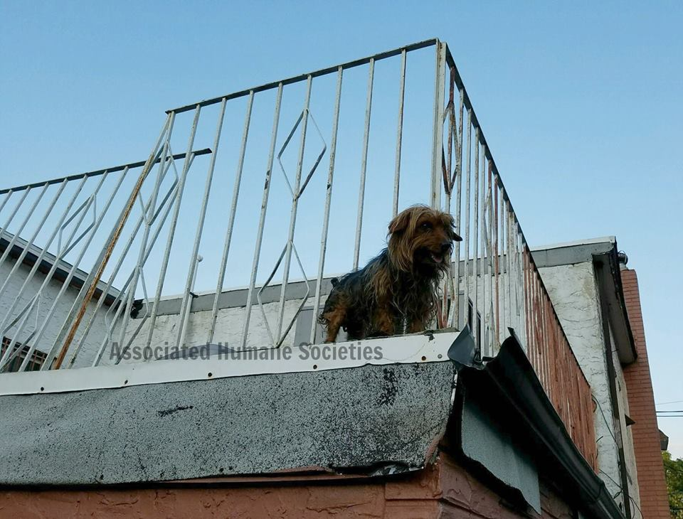 dogs-roof-dancing-2