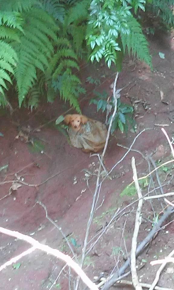 facebook-rescue-dog-1