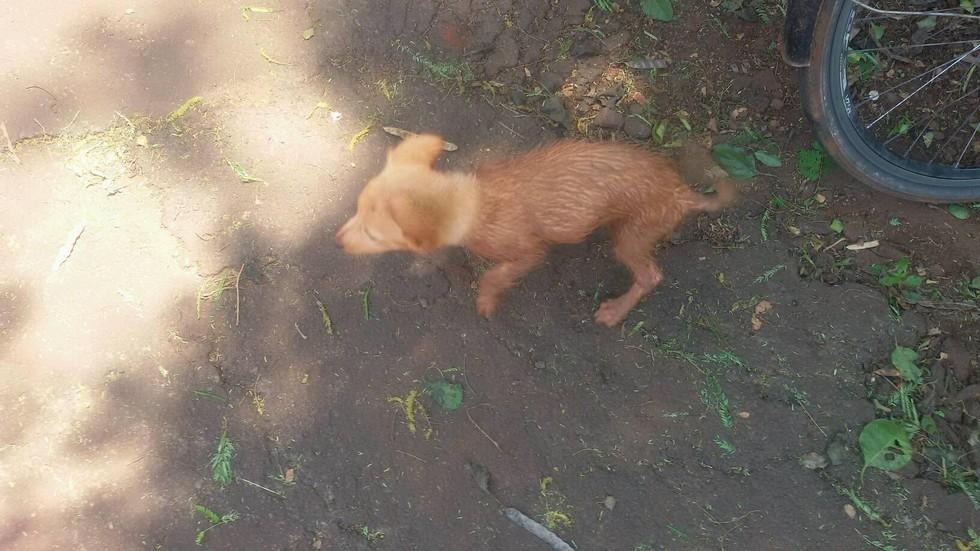 facebook-rescue-dog-4