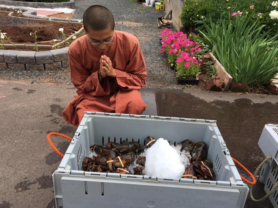 moines-liberent-homards-6