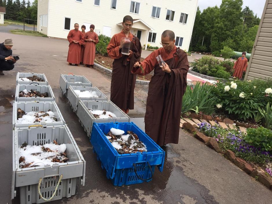 moines-liberent-homards-7