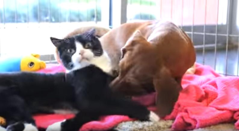 paralyzed-cat-dog-4