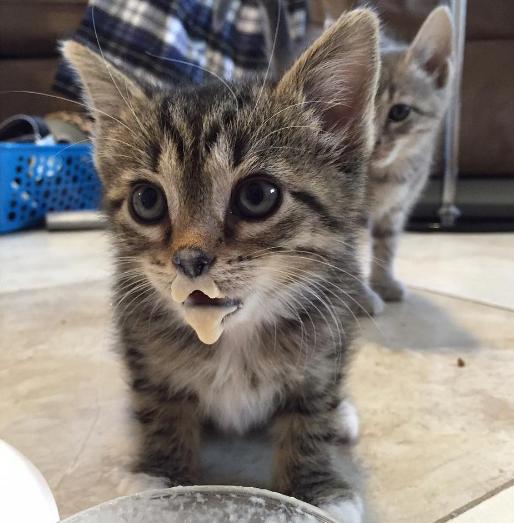 pourquoi-chats-chipotent-2