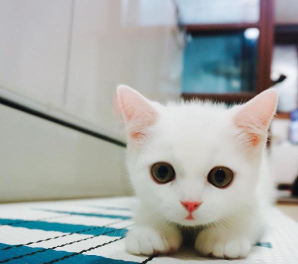pourquoi-chats-chipotent-42