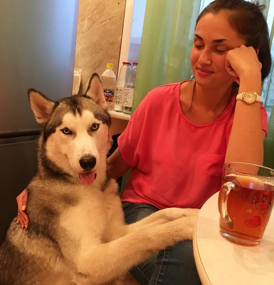 raisons-adopter-husky-22