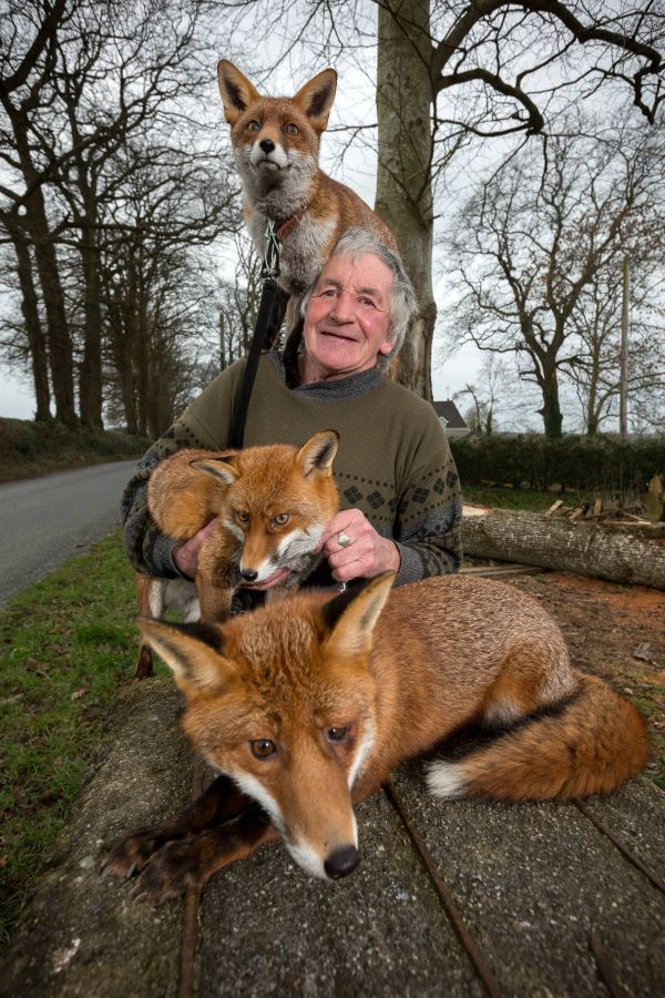 Three Foxes Refuse To Abandon The Big-Hearted Man Who Saved Their Lives