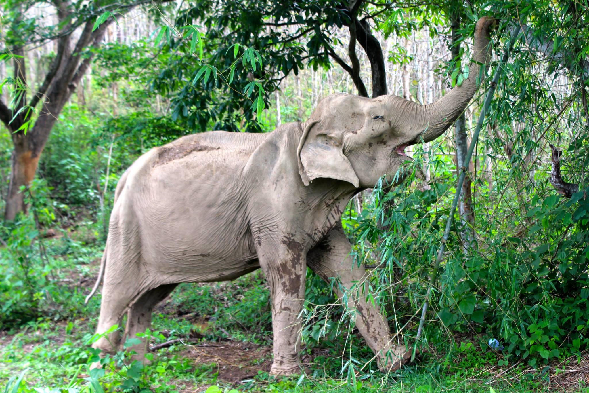 sao-noi-elephant-2
