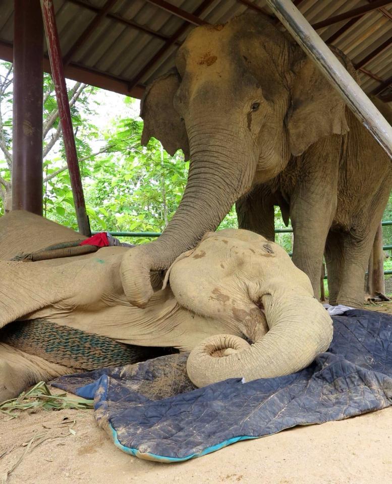 sao-noi-elephant-3