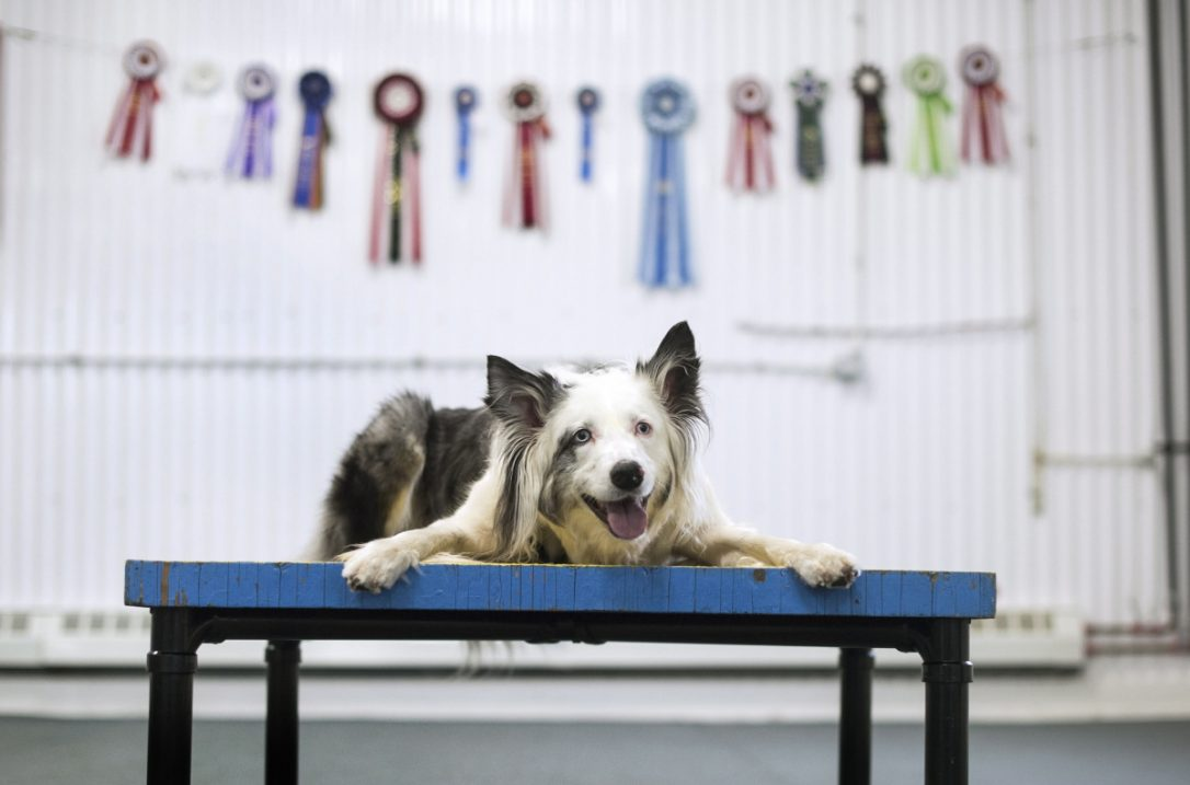 seven-death-dog-1