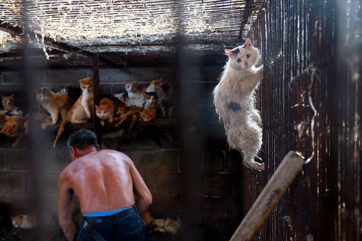 cat-yulin-miracle-1