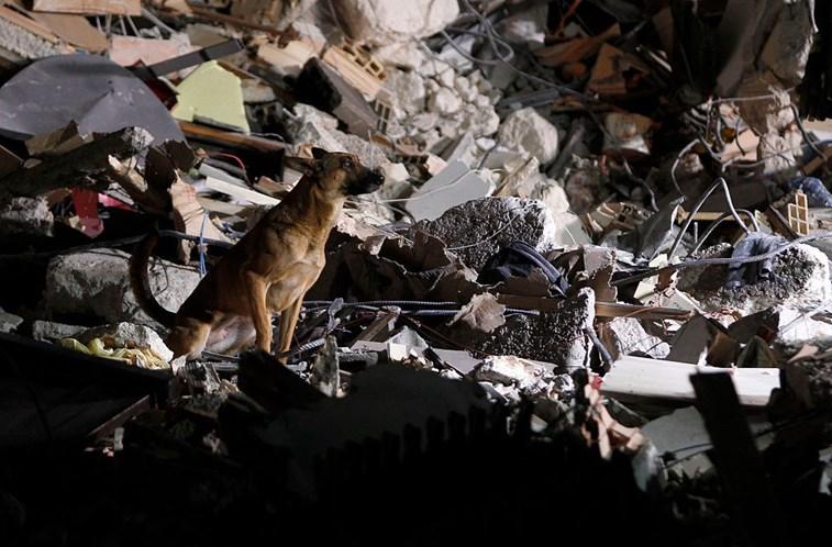 chien-funerailles-italie-3