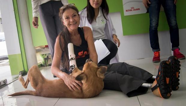 cola-mutilation-thailande-chien-8