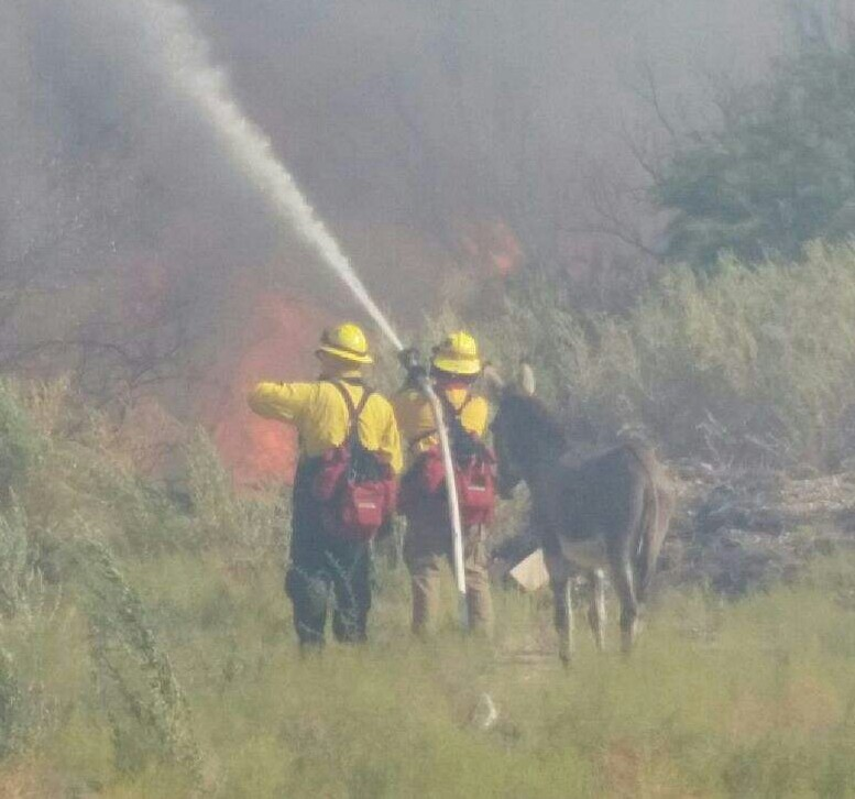 donkey-flames-1