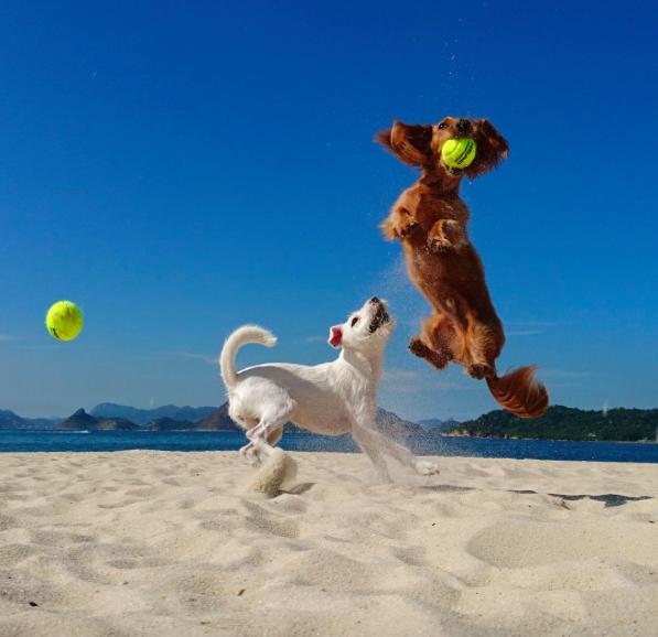 international-day-dog-2