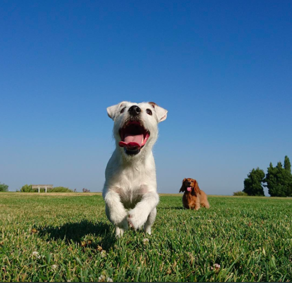 international-day-dog-8