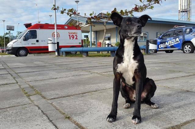 negao-dog-1