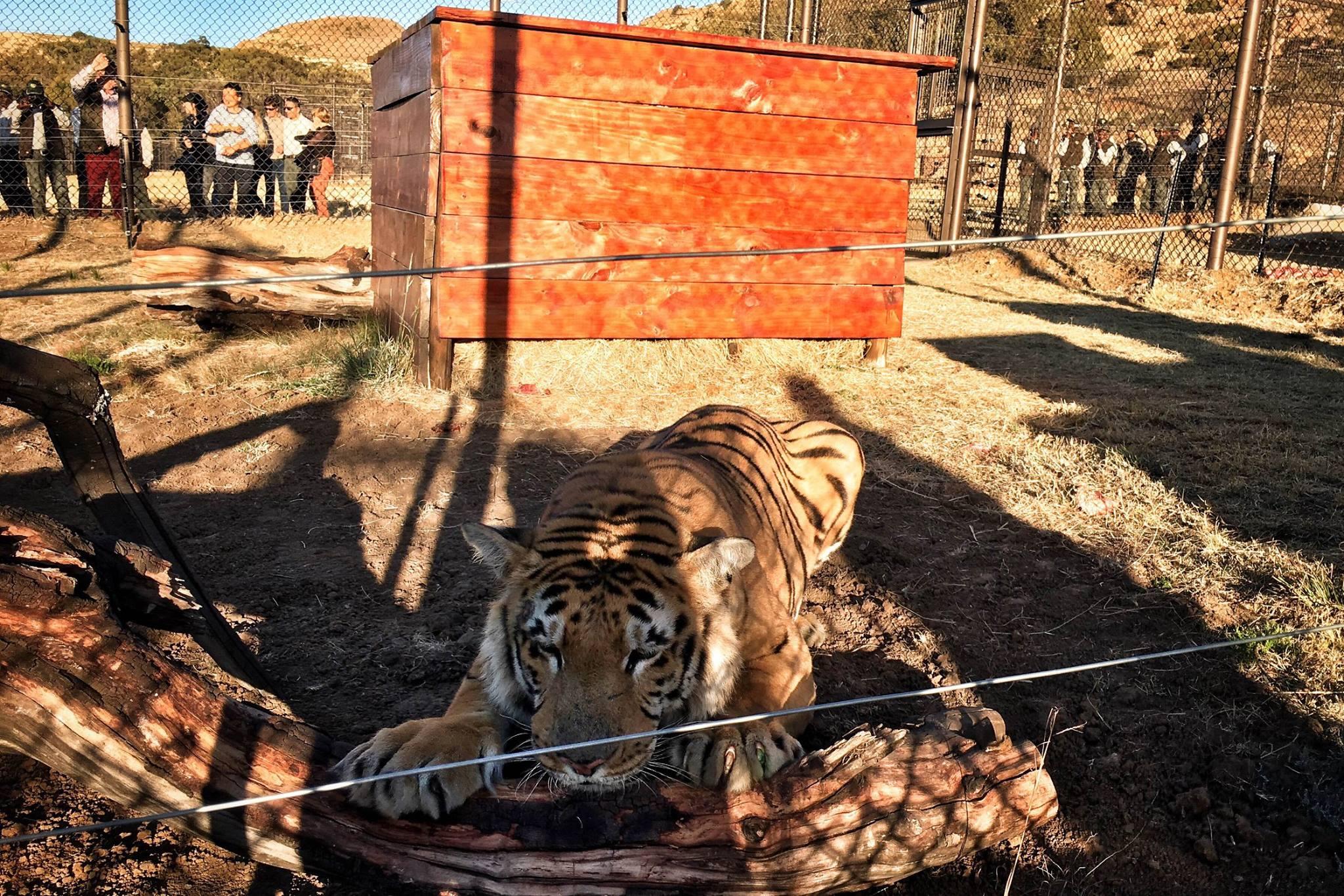 zoo-gaza-sauvetage-four-paws-19