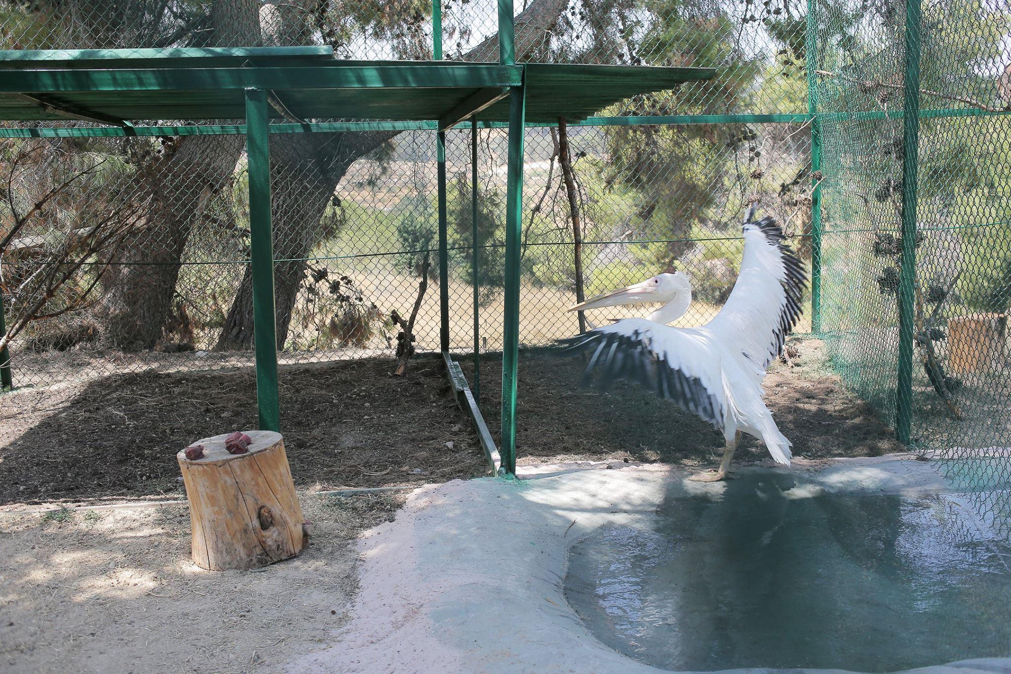 zoo-gaza-sauvetage-four-paws-22