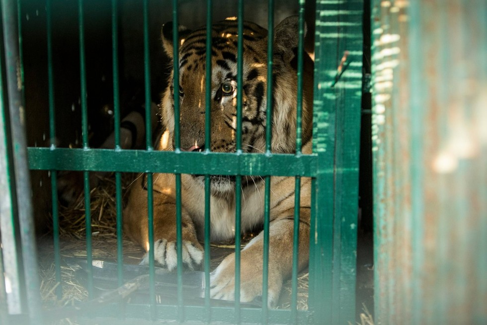 zoo-gaza-sauvetage-four-paws-6
