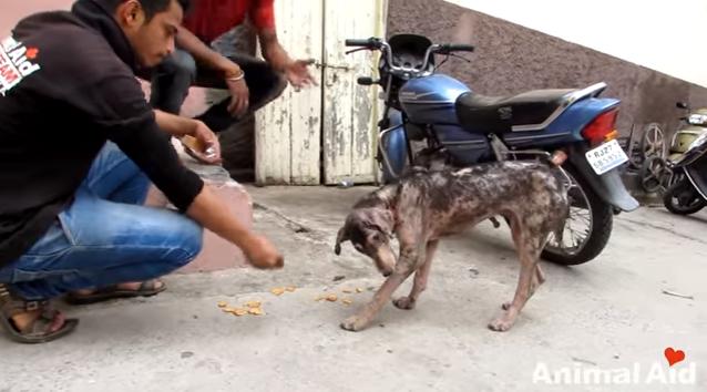 dog-lonnie-india-5