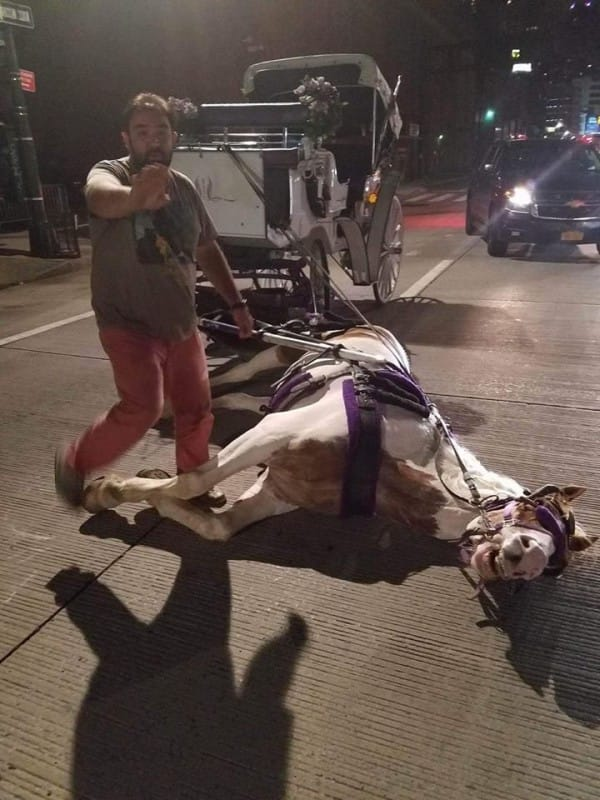 carriage-horse-collapsed-norman-new-york-1