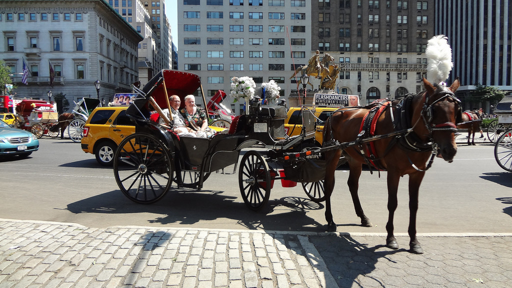 carriage-horse-collapsed-norman-new-york-3
