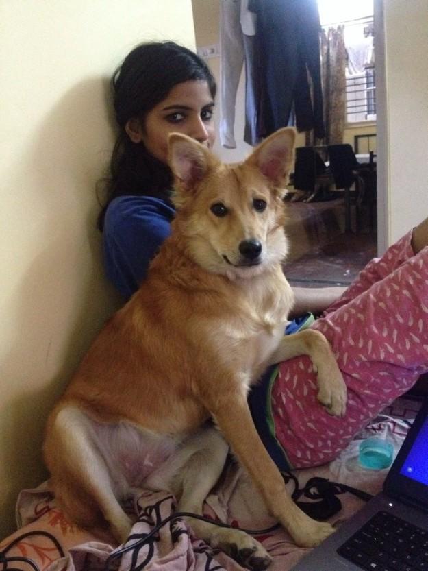 indienne-annule-mariage-arrange-chien-3