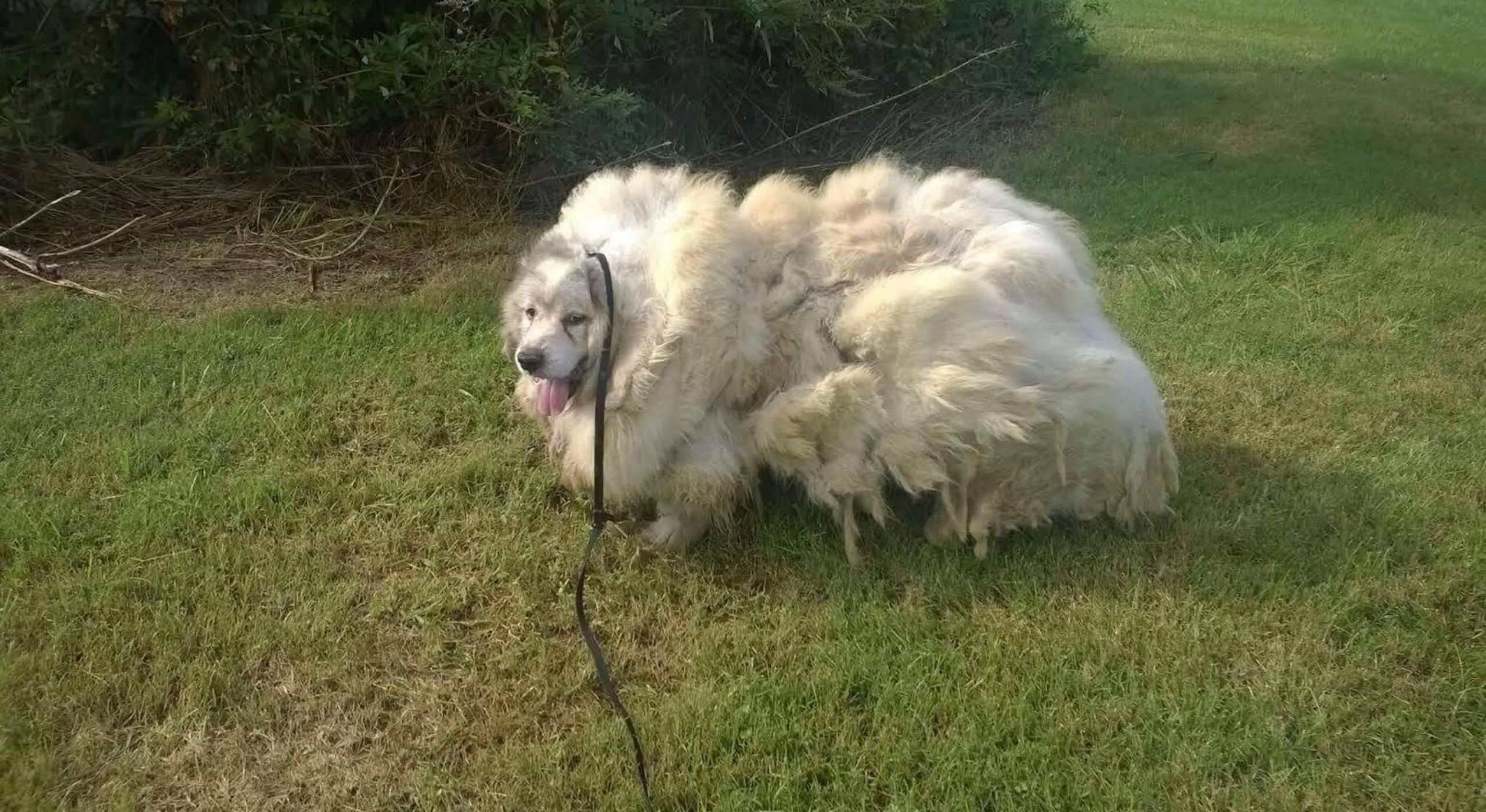 lazarus-patou-chien-sauvetage-4