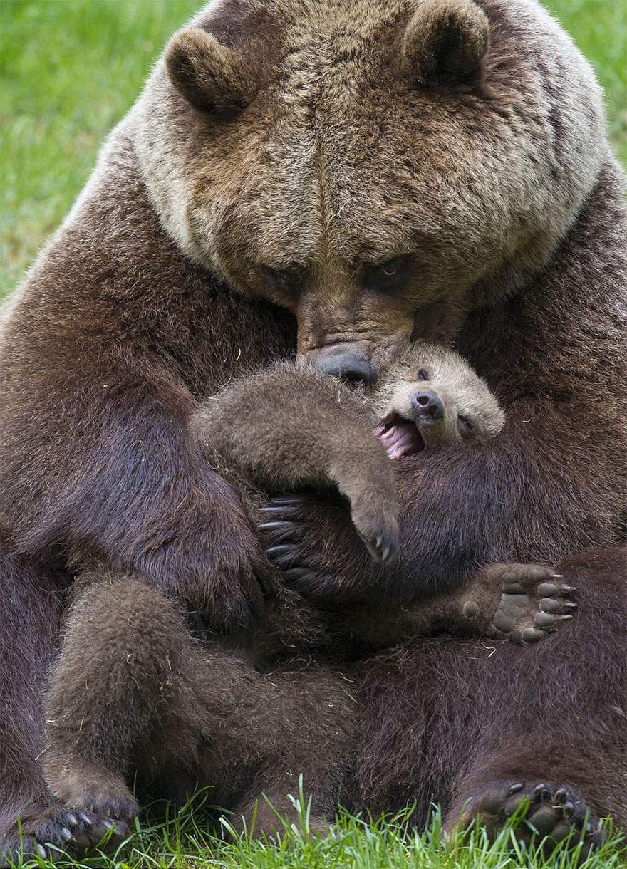 maman-ours-3