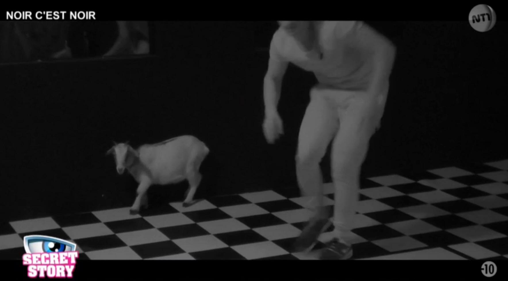 secret-story-animaux-vivants-petition-19