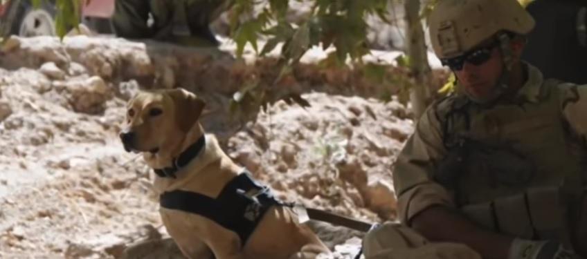 taylor-chien-soldat-retrouvailles-2